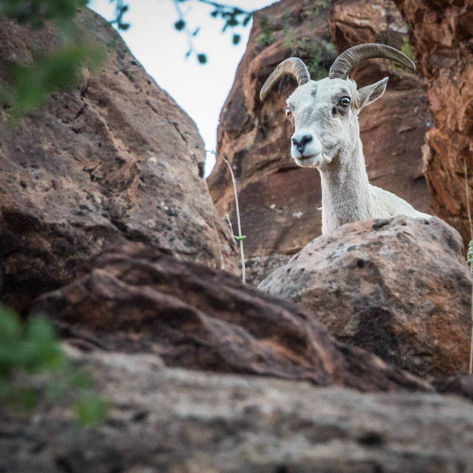 Zion NP – Canyon Overlook Trail: Ein verstecktes Schätzchen