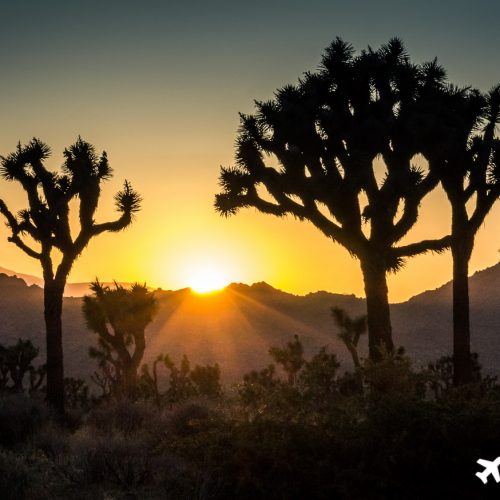 Sonnenuntergang im Joshua Tree National Park.